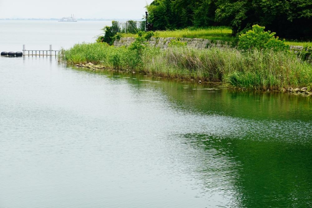 タイリクバラタナゴの釣り方