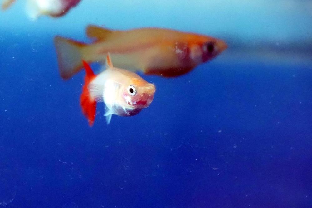アンモニアから魚を守る