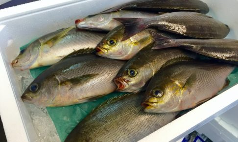 イサキ釣りの仕掛けや釣り方