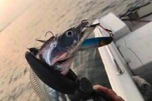 サムライジグはあらゆる魚種に効く万能ジグ!