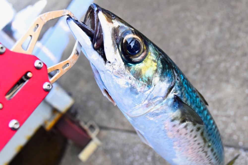 防波堤釣りはなぜ釣れる?