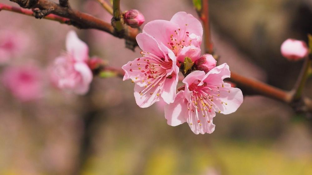 春のバチ抜けシーズンに効果的なシーバスミノーは?
