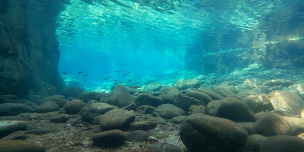 ハゼクランク用のルアーの潜行深度