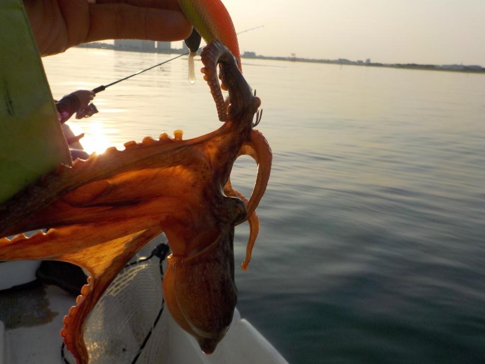 タコ釣りは船でも楽しめる!