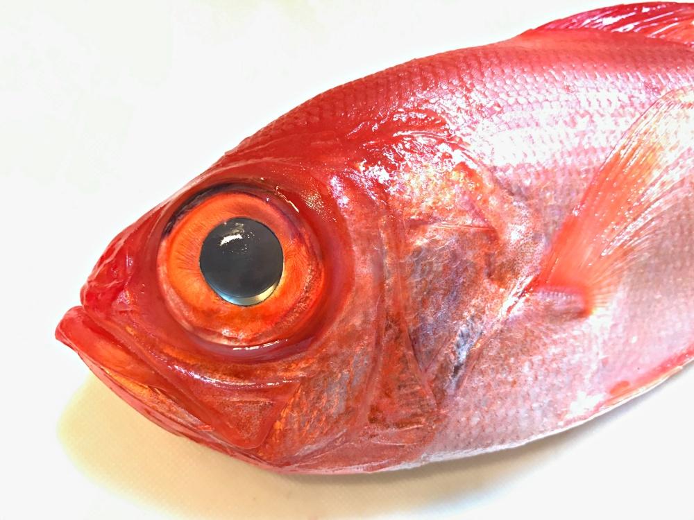 キンメダイの目は特殊な構造をしています